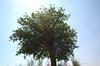 すくすく伸びる樹